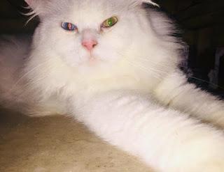 Pertanda Kucing Berantem Dimana Saja dan Kapan Saja