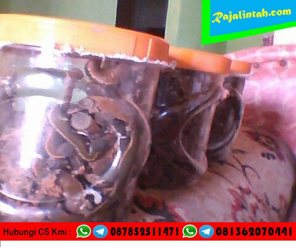 Jual Lintah Papua Bandung, Jual Lintah Papua Kota Bandung, Jual Lintah Papua di Bandung, Jual Lintah Papua Murah Bandung, Jual Lintah Papua didaerah Bandung.