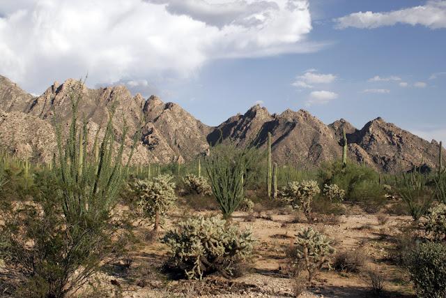 Sonora_Desert_2007