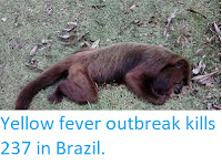 http://sciencythoughts.blogspot.co.uk/2018/03/yellow-fever-outbreak-kills-237-in.html