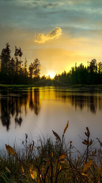 Evening, Lake, Trees, Sunset, Dusk, Landscape