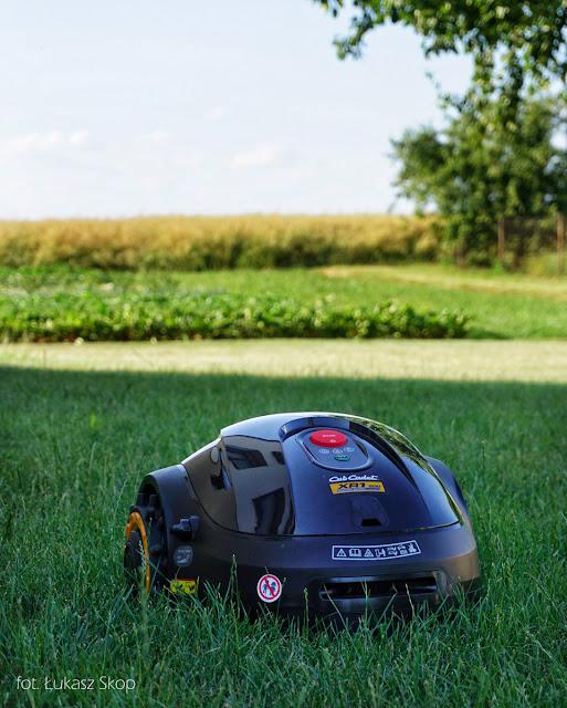 robot koszący w ogrodzie