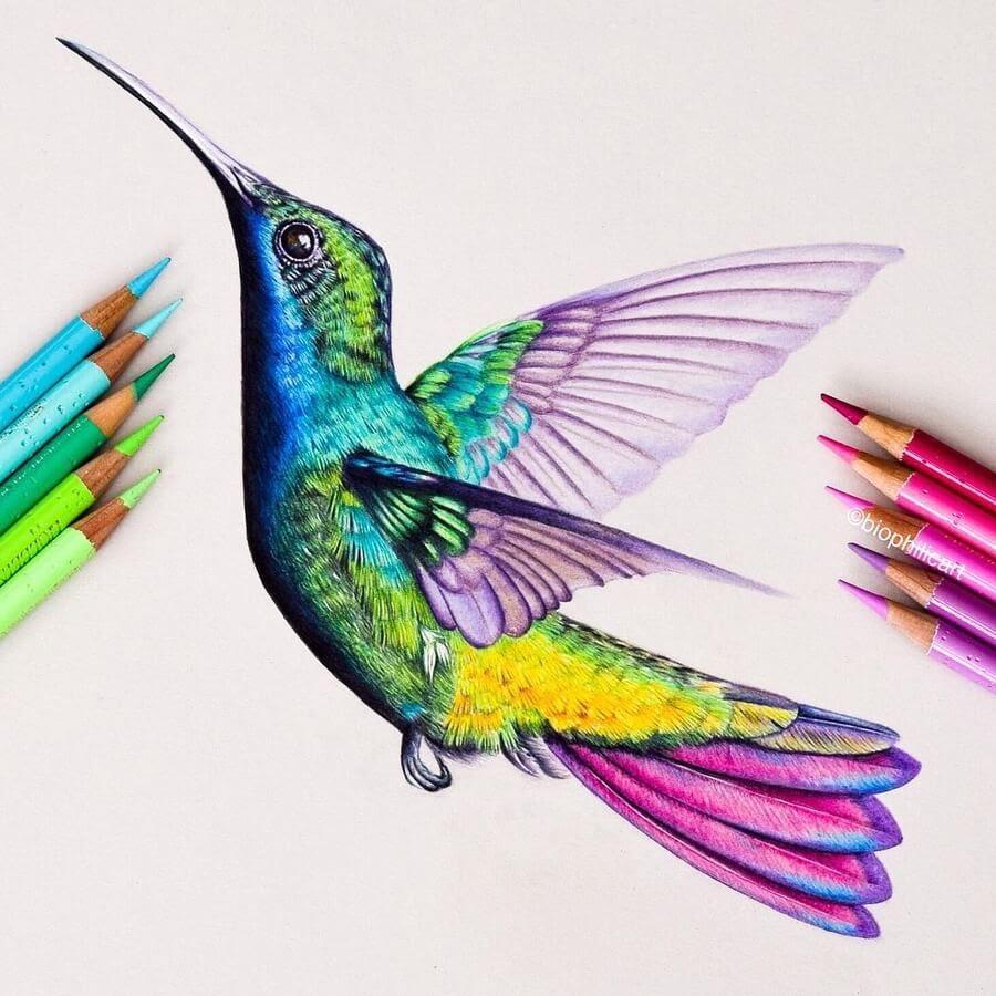 11-Hummingbird-Sallyann-www-designstack-co