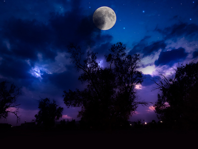 Trees silhouette with moon stock image