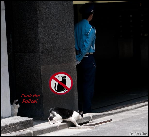Photoshopped Cat picture • NO CATS ALLOWED here. F*ck the Police, the street is mine! [ok-cats-site.com]