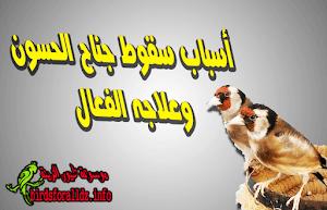 5449576f3 علاج اسهال الطيور بسرعة بالاعشاب وماهي اسبابه وانواعه بالصور ...