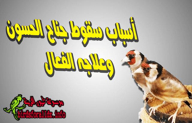 اسباب سقوط جناح الحسون وهجينه وعلاجه الفعال
