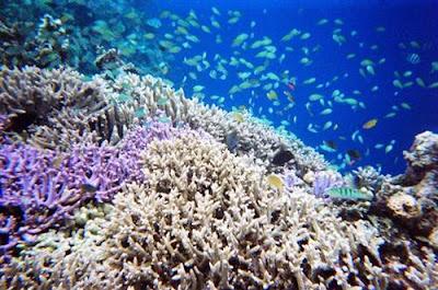 Taman bawah laut menjangan