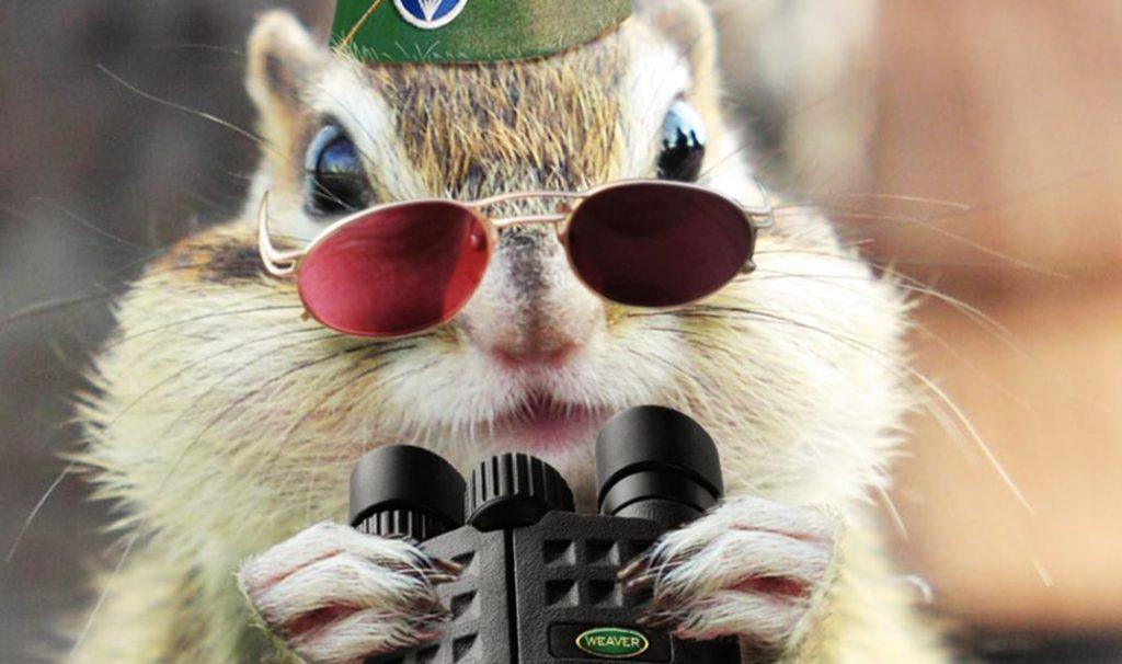 Squirrel-spy-ppcorn