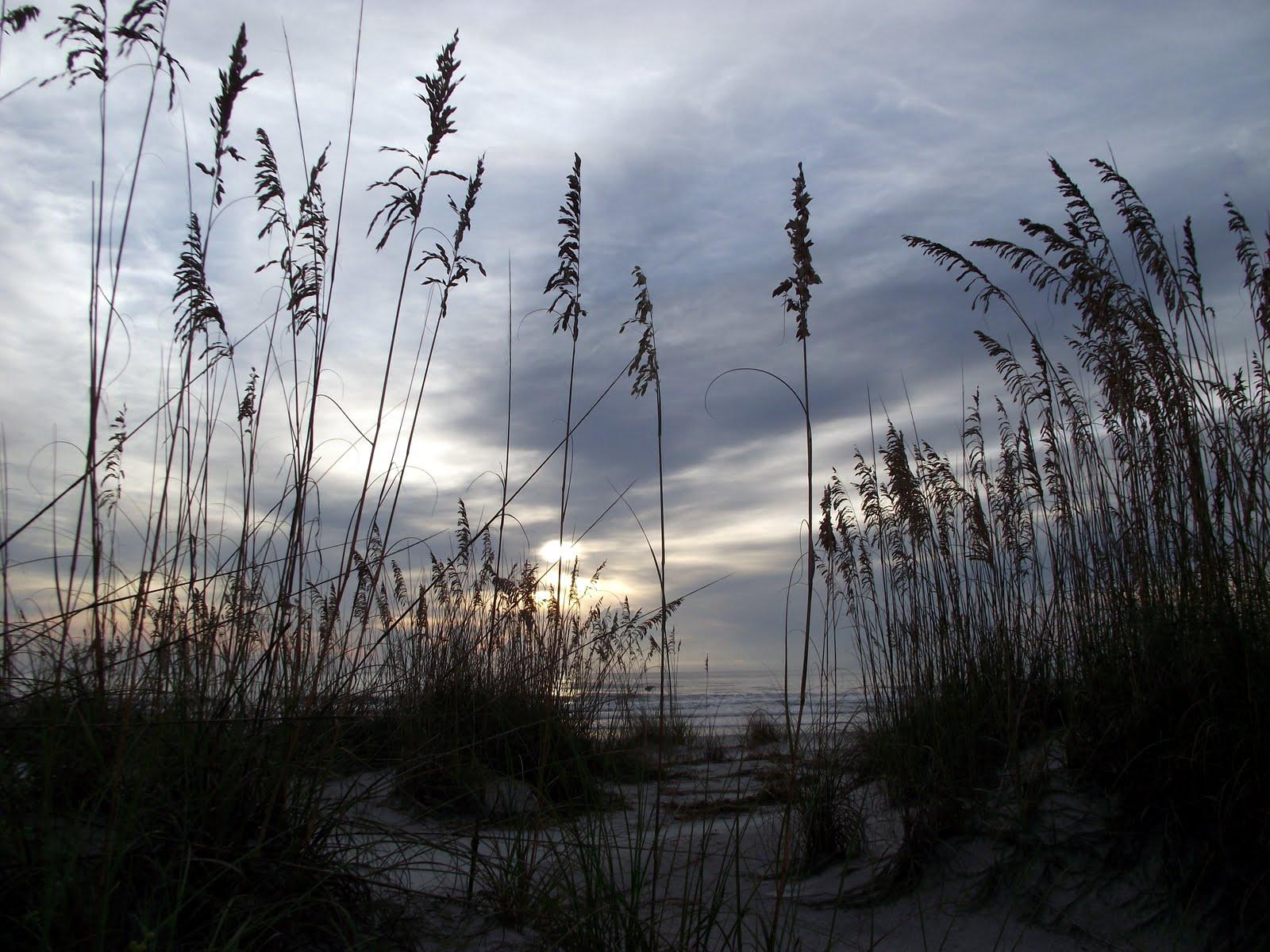 The Essential Beachcomber: Sep 1, 2011