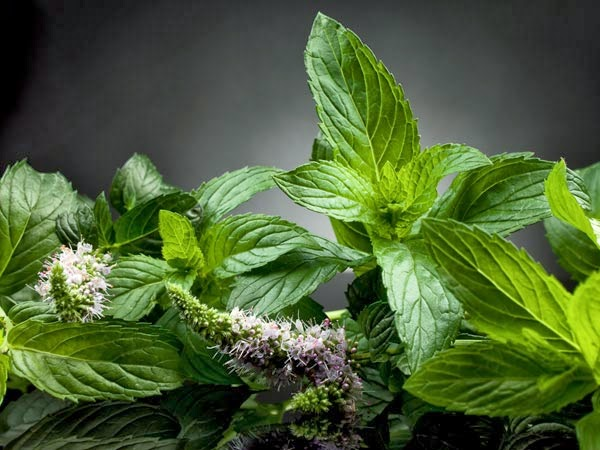 manfaat daun mint