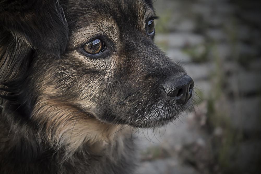 Doggy Demeanours