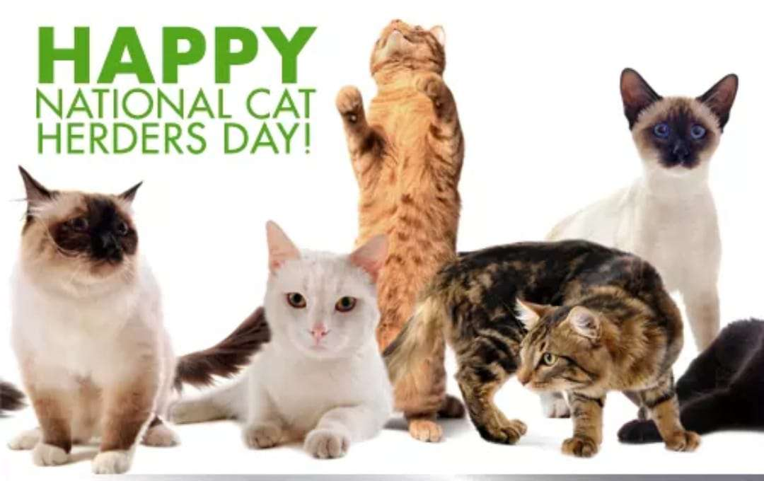National Cat Herders Day Wishes Awesome Images, Pictures, Photos, Wallpapers