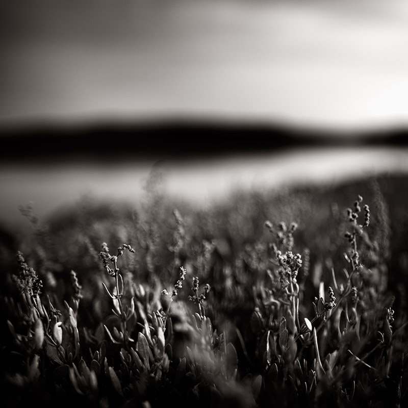 Fine Art Photography by Xavier Rey from Bordeaux, France.