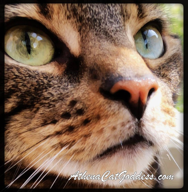 close up of green-eye tabby cat