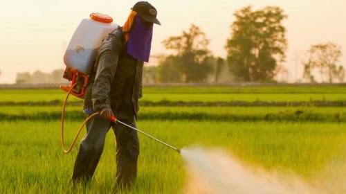 Σπουδάστριες ΤΕΙ βραβεύτηκαν για ζιζανιοκτόνο ακίνδυνο για τον άνθρωπο
