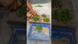 Meracik Makanan Lovebird Lomba dengan Daun Mengkudu