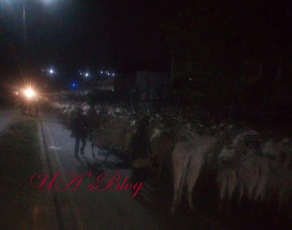 Miyetti Allah Bans Night Grazing Nationwide