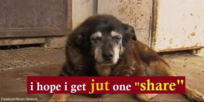 World's Oldest Dog Goes to Sleep For the Last Time