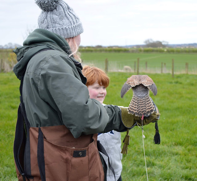 13 North East Days Out which are perfect to enjoy with Grandparents  - whitehouse farm