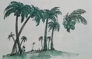 नारियल के पेड़