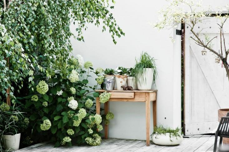 La plantas del jardin en el patio trasero de una casa espectacular en Polonia