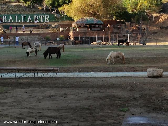 miniature horses inside Baluarte