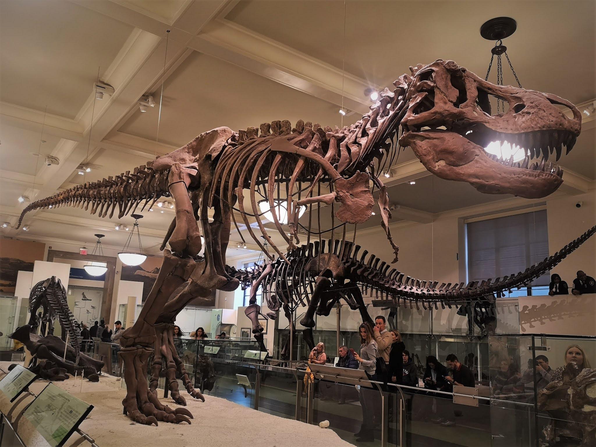 American Natural History Museum, New York City