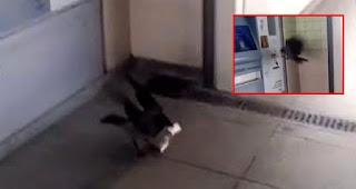 بالفيديو..غراب يأخذ الأموال من آلة تعبئة بطاقة إسطنبول