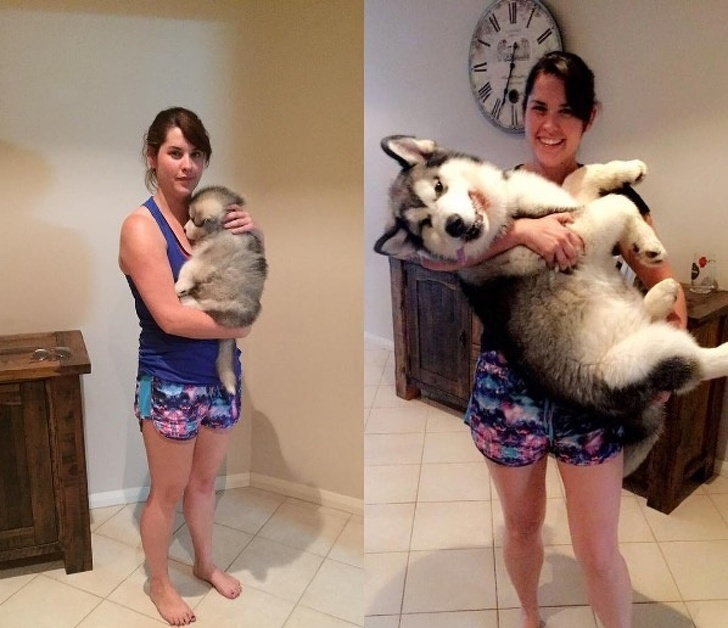 26 Hilarious Pictures Of Pets That Made Our Day