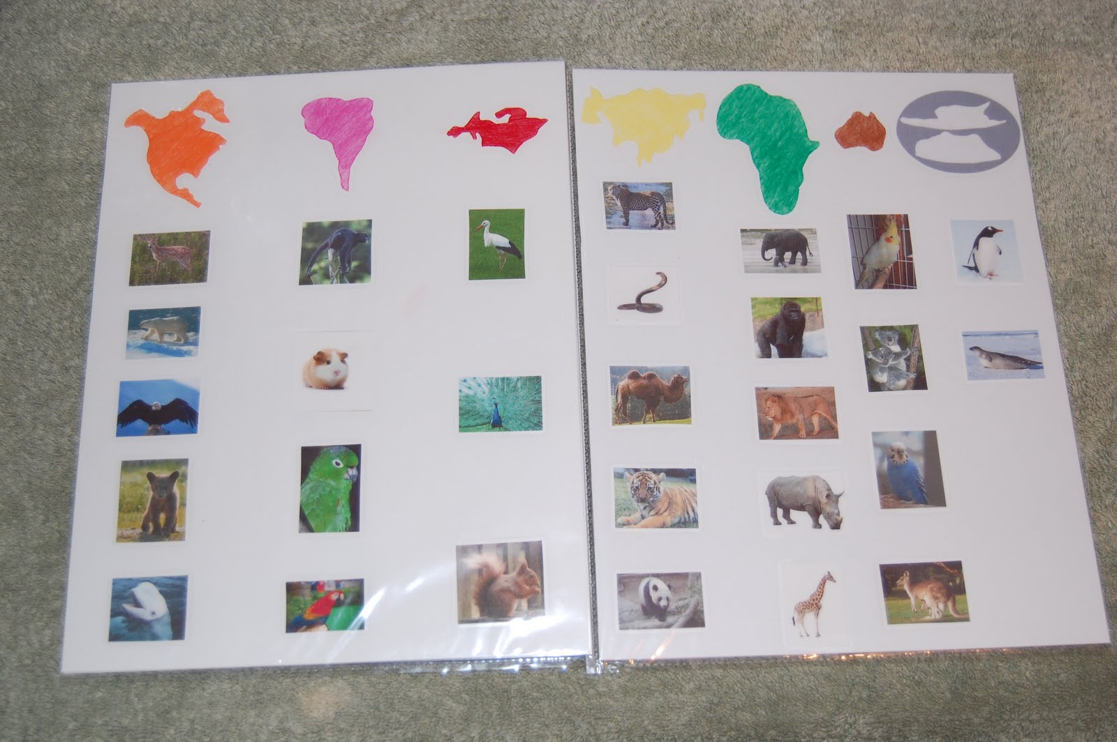 Montessori Design Animals Of The Continents