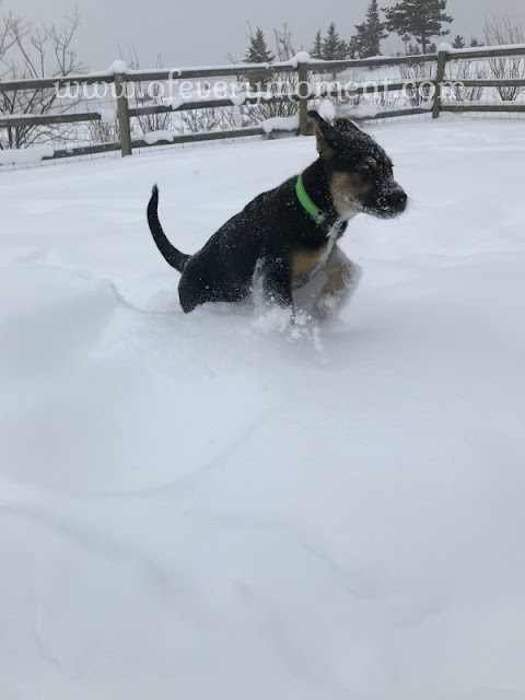 puppy in deep snow