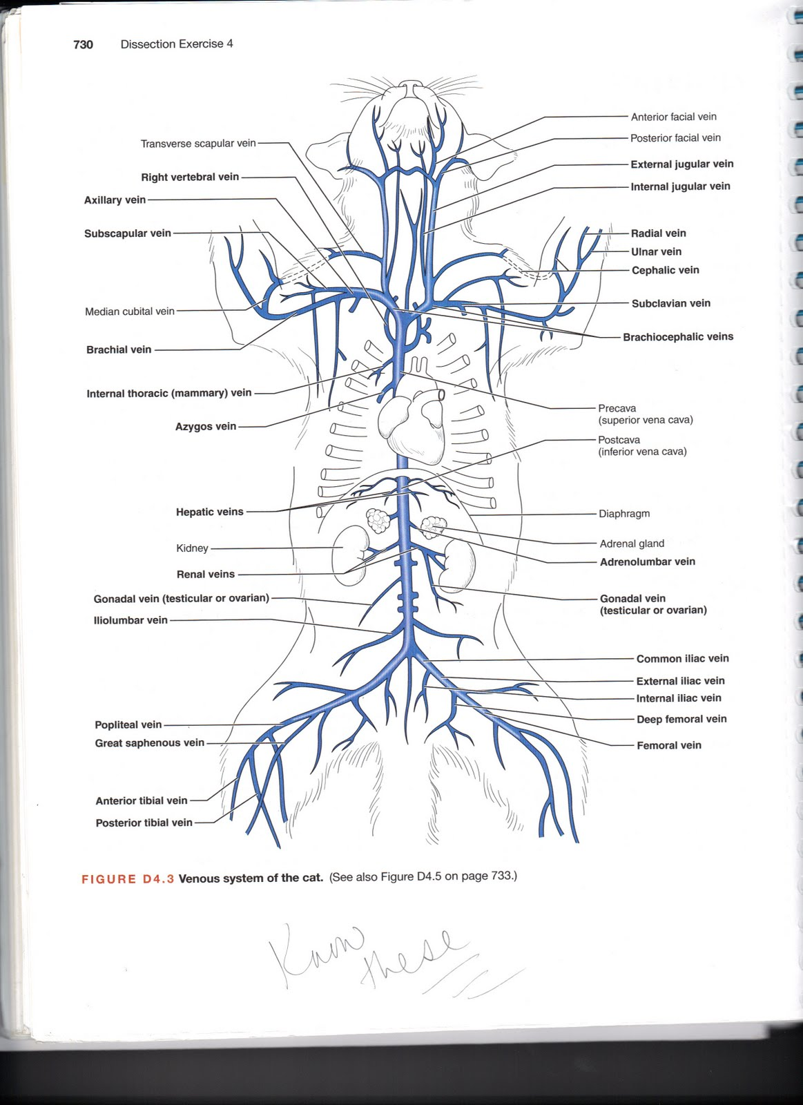 human anatomy major arteries diagram wiring for inverter and veins of the body free