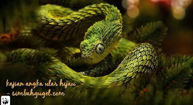 angka ular hijau kode alam