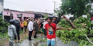 Angin Kencang, 8 Rumah Rusak dan Pohon Tumbang di Galang