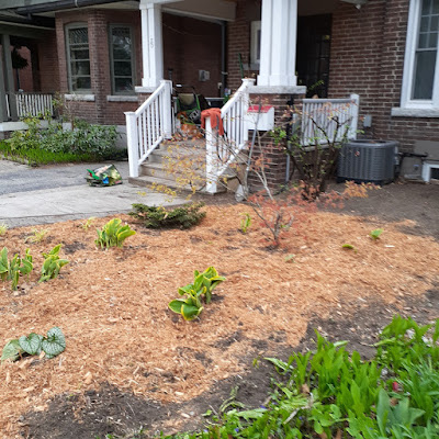 High Park North Spring Cleanup and Makeover After by Paul Jung Gardening Services--a Toronto Organic Gardener