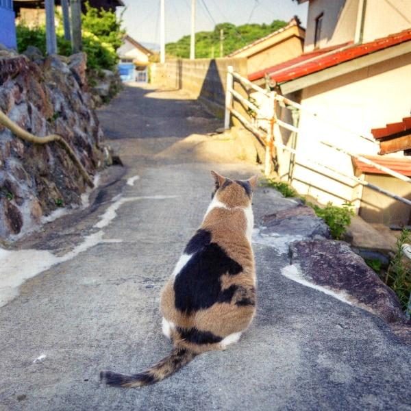 neko shima cat island