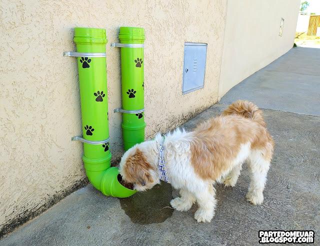 comedouro cachorro de rua