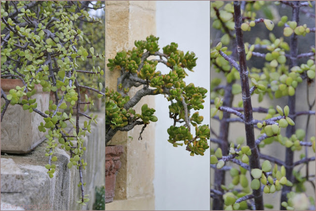 blog ogrodowy barwy ogrodu