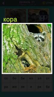 кора дерева в дуплах которых находятся маленькие зверьки только одни головы видны