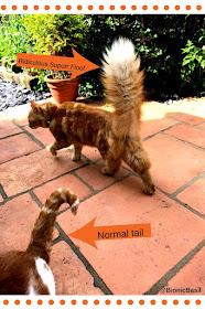 Fudge's Ginormous Tail @BionicBasil®
