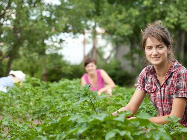 Ο αριθμός των Νέων Αγροτών μειώνεται στην Αργολίδα