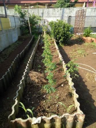 kebun sayur yodha anindita gambar 2
