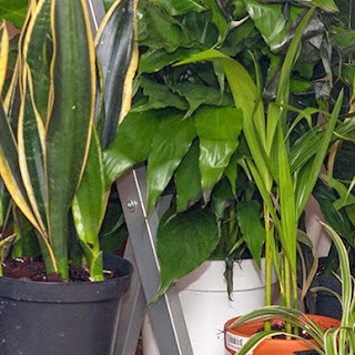 Cost Effective Air Cleaning Plants