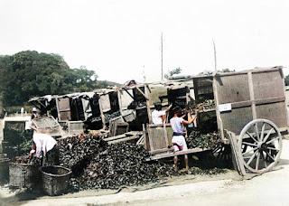 paket daun teh di pabrik naga huta