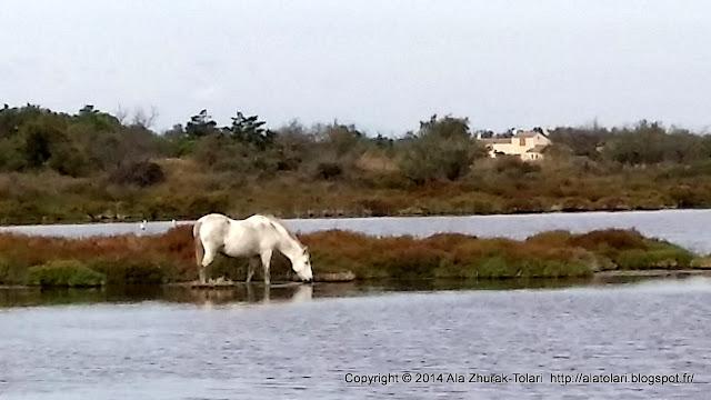 Le Parc naturel régional de Camargue 2014