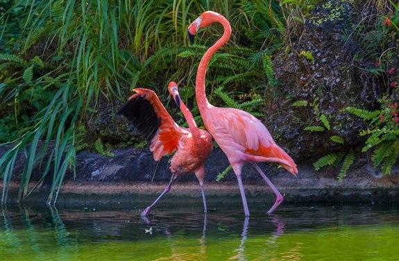 Flamingo - F Hayvan İsimleri