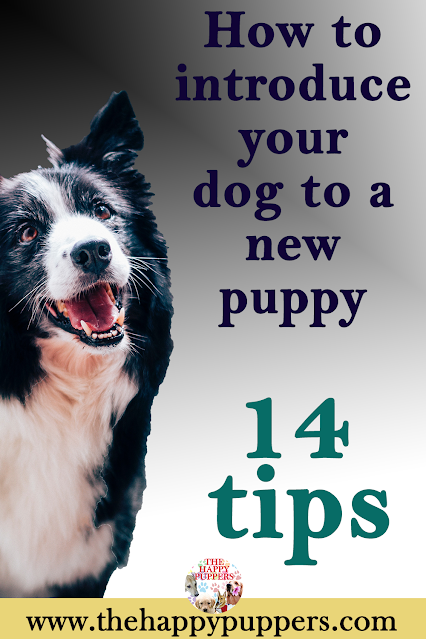 How to introduce your dog to a new pup. 14 amazing tips for a seamless transition.