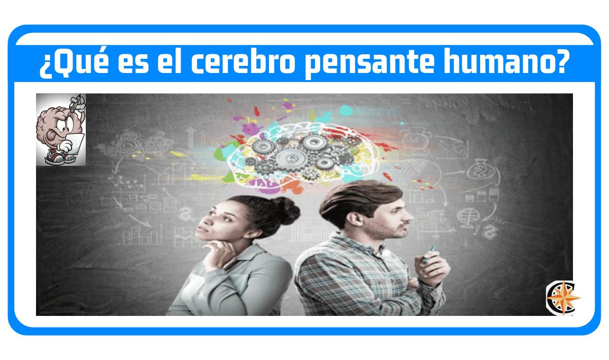 ¿Qué es el cerebro pensante humano? ¿Cómo funciona?
