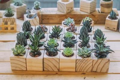 mini vasinhos de madeira para suculentas